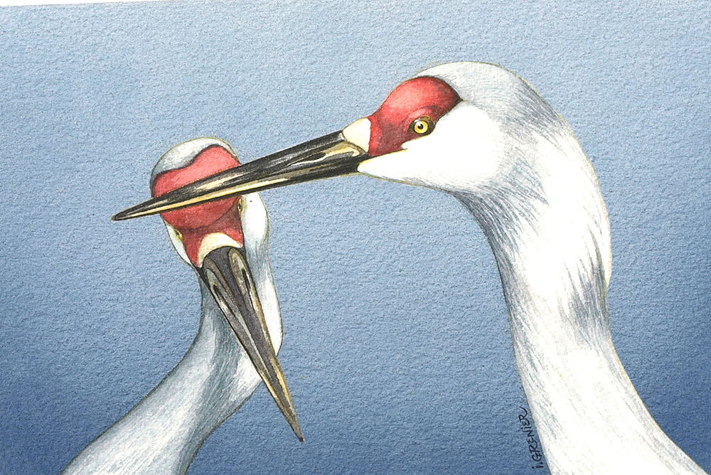 Sandhill Cranes by Irene Watts | ArtworkNetwork.com