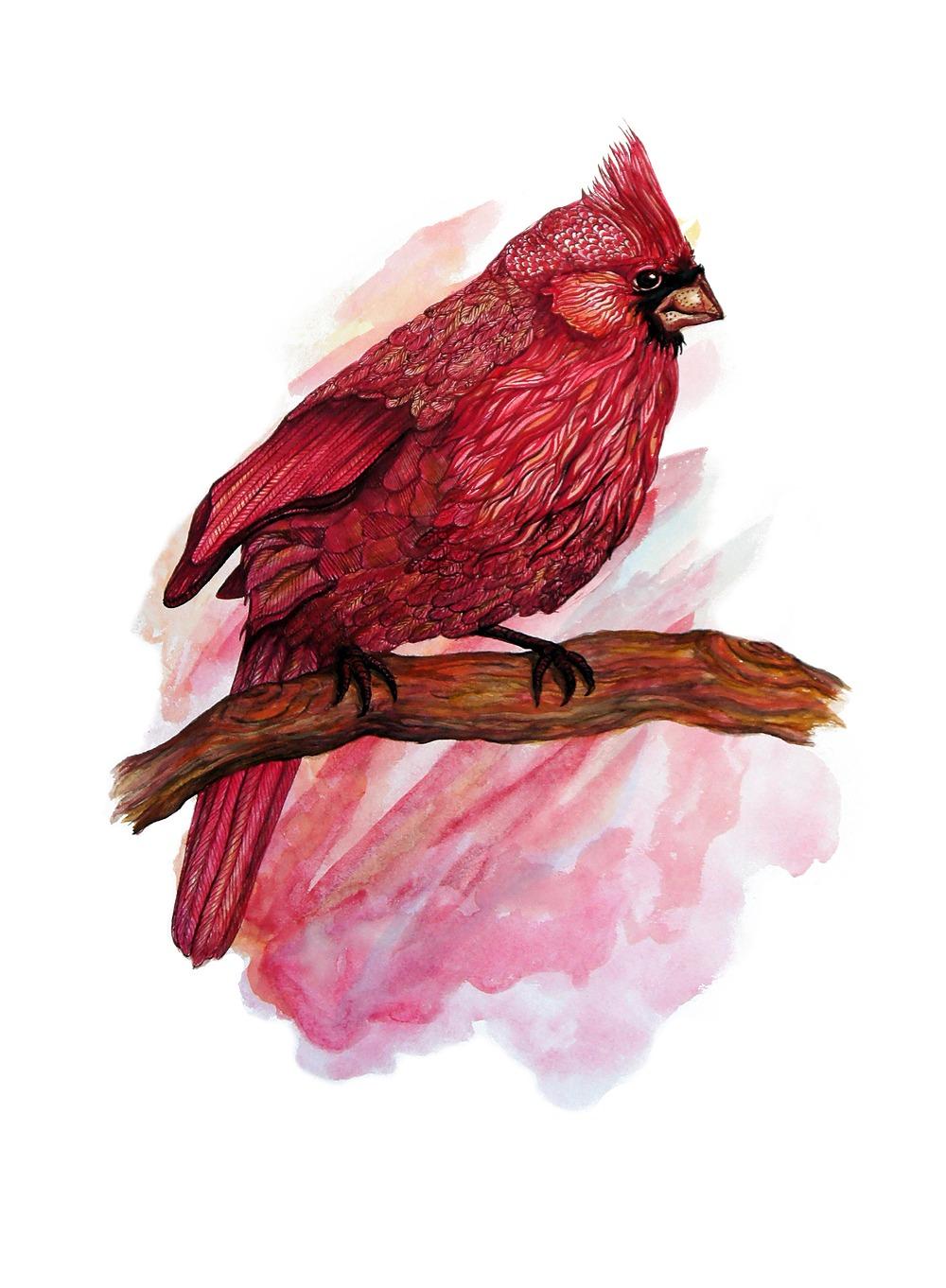 Cardinal by Alexa Zepp   ArtworkNetwork.com