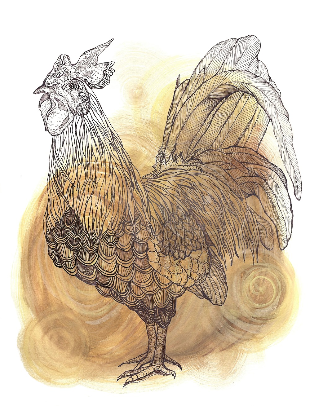 Rooster by Alexa Zepp | ArtworkNetwork.com